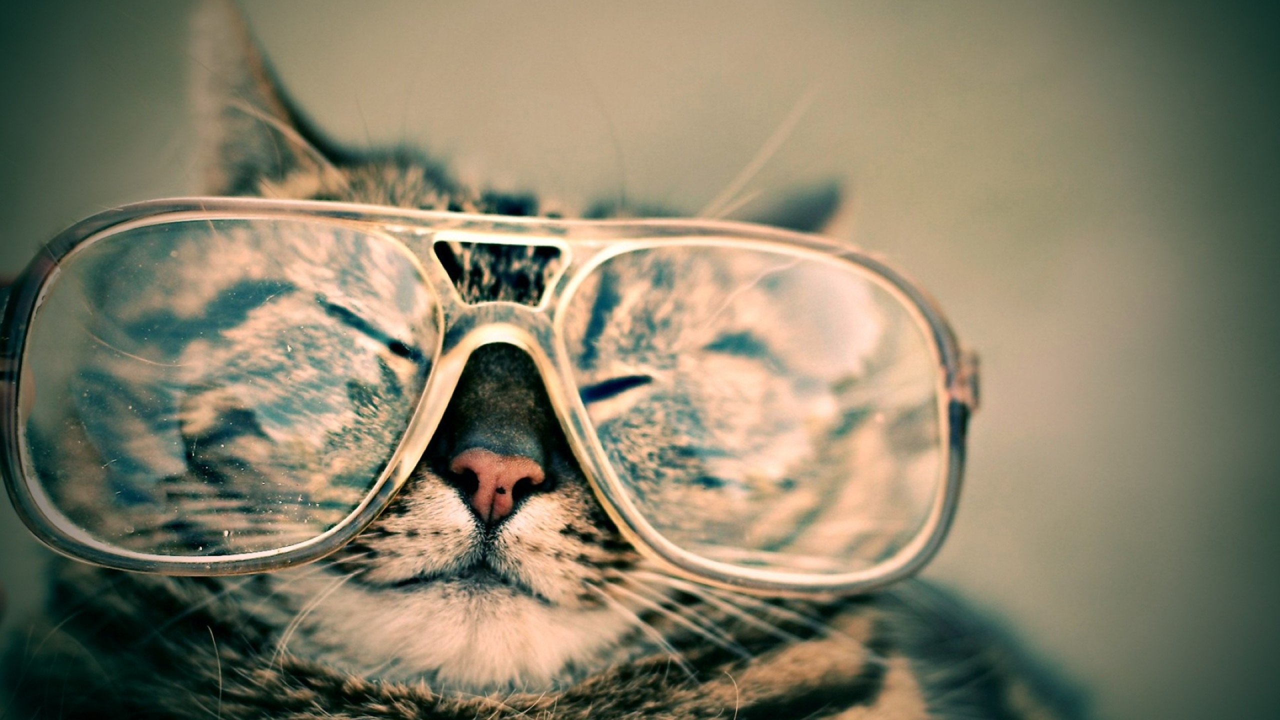 Cat with sunnies